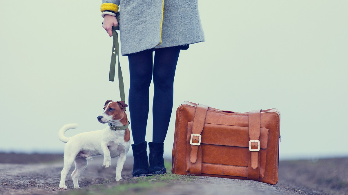 Travelling to the EU with a pet after Brexit