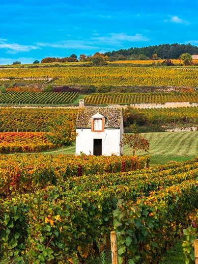 UNESCO world heritage vineyards in Burgundy