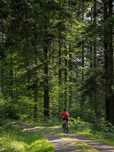 Woman cycling in Black Forest region