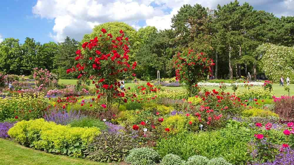 Rose garden in Westfalenpark, Dortmund