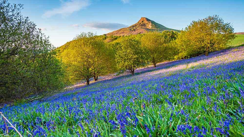 Newton Woods - Rambling location in Yorkshire, UK