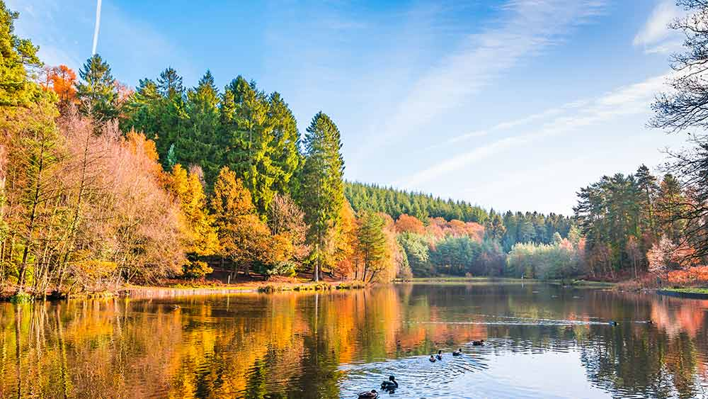 Forest of Dean in England