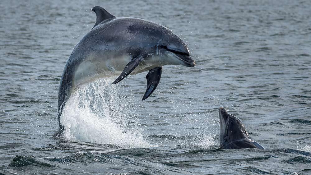 Dauphins à Inverness, en Écosse