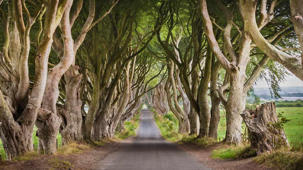 Armoy donkere hagen in Noord-Ierland