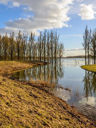 De Biesbosch National Park in the Netherlands