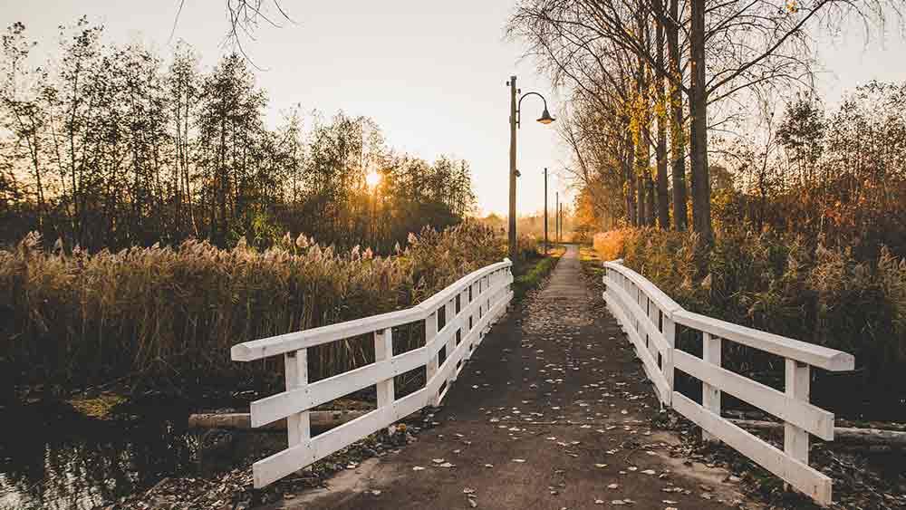 Bridge in a park in Eindhoven, Netherlands