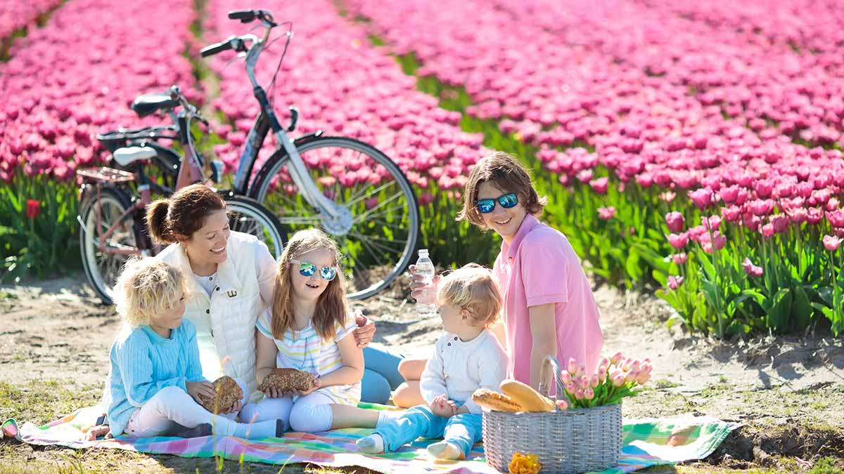 Family having a picnic in the tulip fields of the Netherlands.