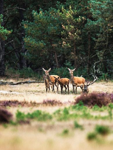 Wildlife at Hoge Valuwe National Park
