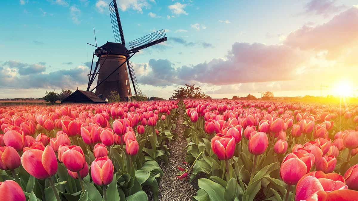 Dutch Windmill in Rotterdam