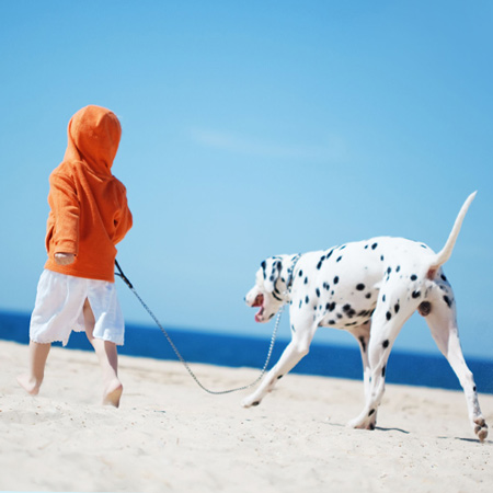 Taking your pets on holiday